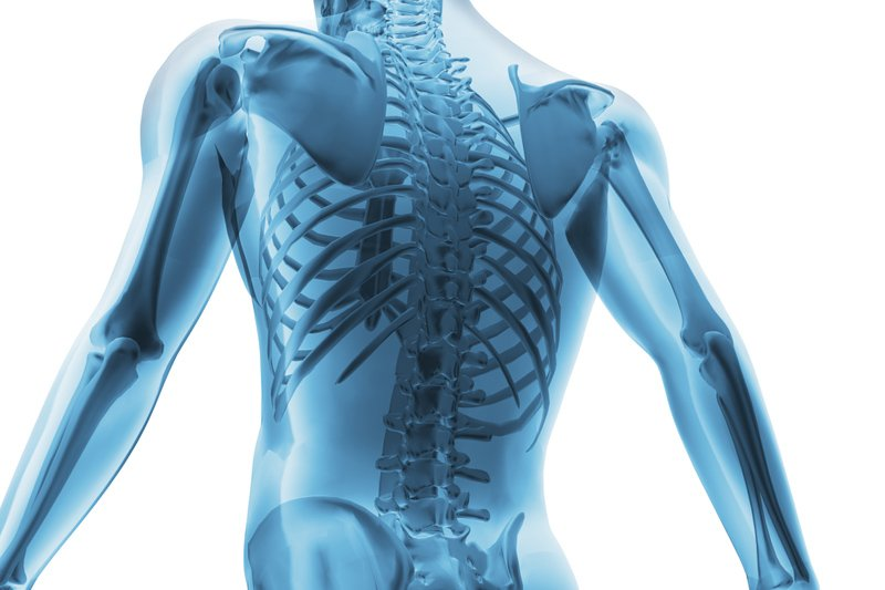 Опорно-двигательный аппарат развивается до 30 лет. В молодости процессы обновления и разрушения клеток и хрящей находятся в сбалансированной форме. В этот период нарушение целостности тканей чаще всего происходит вследствие травм и повреждений.