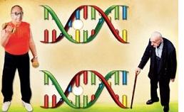 Контролируя и своевременно корректируя уровень гормона ДГЭА в организие в любом возрасте, мы противостоим возникновению болезненных состояний, которые связаны с возрастными изменениями.